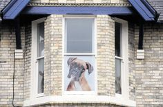 @southwalesargus PIC OF THE DAY: KEEPING GUARD: A picture of a dog in a window Pic: MARK LEWIS