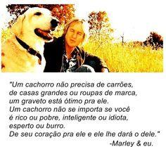 Um cachorro não precisa...
