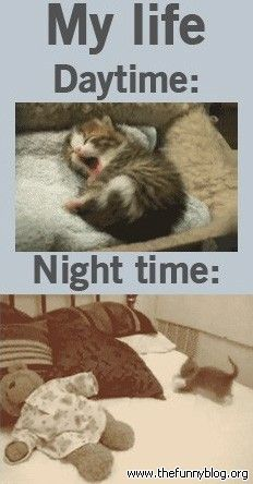 funny kitten ;) :o