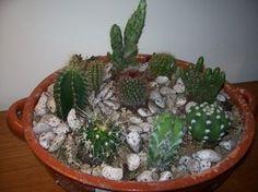 Pequeno jardim de suculentas e mini cactos.  Fotografia: Flores - Cultura Mix.