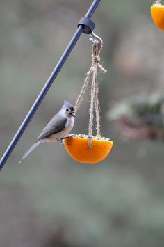 I'm preparing a class for the Master Gardener chapter that I'm a member of on making bird-feeders utilizing natural sources, recycled materi. Suet Bird Feeder, Best Bird Feeders, Homemade Bird Feeders, Humming Bird Feeders, Humming Birds, Gardening For Beginners, Gardening Tips, Flower Gardening, Bird Seed Ornaments