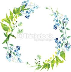 Vektorgrafik : Forget-me-not and herb watercolor round vector frame