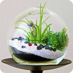 Terrariums Are Unique Living Frames Requiring Very Little Care. Simonau0027s  Sleek Round Shape Brings Harmony · Air PlantsHouse ...