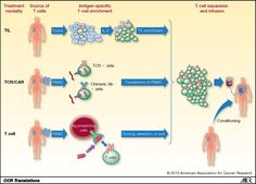 car-t cells generation - Google Search