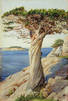 An Old Red Cedar on the Rocks near West Manchester, Massachusetts by Marianne North; 1871; Oil on board; Collection: Royal Botanic Gardens, Kew, England