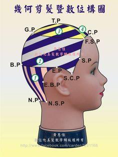 幾何剪髮完整裁剪設計區,結合縱髮片、正斜髮片、定點放射髮片,進行另一款創意剪髮之數位構圖-頂面呈現
