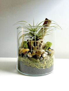Brand new ollection>>>>> Terrariums are a great low maintenance way to garden indoors. This beautiful glass vase air plant terrarium is an excellent DIY gift and a great way to brighten up anyones day. That is if you can part with it:) This listing is ready to display after a