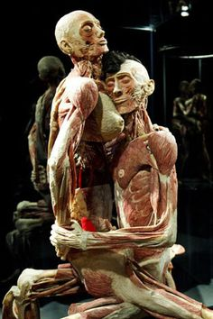 """Gunther Von Hagen's """"Body Worlds. The Human Body, Anatomy Art, Human Anatomy, Gunther Von Hagens, Bodies Exhibit, Real Bodies, Skull Painting, Modern Sculpture, Animal Skulls"""