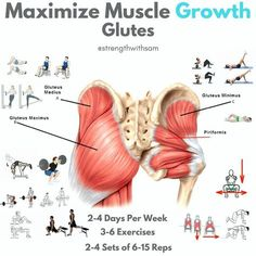 """Maximizing Glute Growth. The Glutes are made up of four main muscles, the Gluteus Maximus, Medius, Minimus, and the Piriformis. Each plays a key role in movement. Gluteus Maximus: This is the biggest muscle and the one most people think of when they think """"glutes"""". It's also the muscle that provides most of the front-to-back and overall size of the glutes. It performs many functions, but is perfect for hip extension. Thus, exercises like the back squat, sumo deadlift, RDL,"""