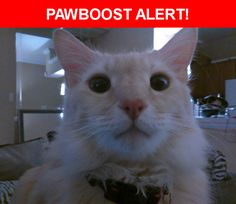 Please spread the word! Butters was last seen in Dallas, TX 75231.  Description: Lost at white rock dart station September 13th wearing blue collar has emerald eyes shy indoor cat   Nearest Address: walling drive dallas texas