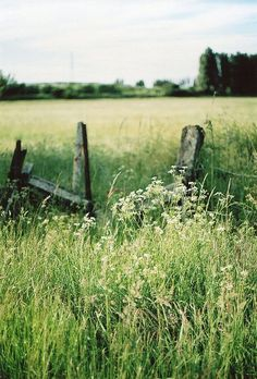 Pretty meadow with a rustic fence!: