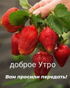 Good Morning, Fruit, Inspiration, Instagram, Have A Good Weekend, Nice Asses, Good Day, Biblical Inspiration, Buen Dia