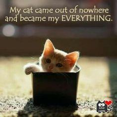 my Everything <3