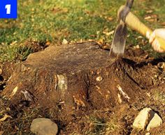 How to Use a Stump Grinder Yourself