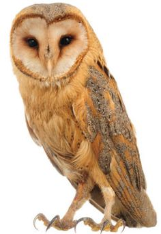 Owl Related Activities
