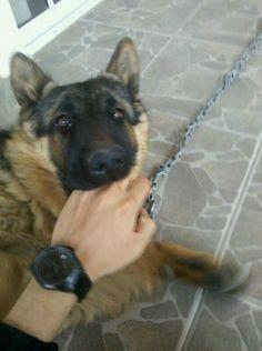 Good boy! :p