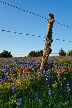 across the lonestar state... #ridecolorfully