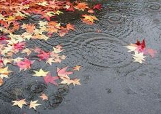 First rain of Autumn Via Annalisa