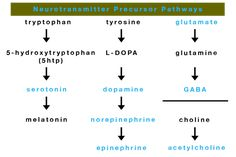 What are the ins and outs of Excitation and Inhibition in neurotransmitter supplementation