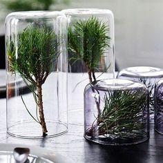 La forêt à votre table