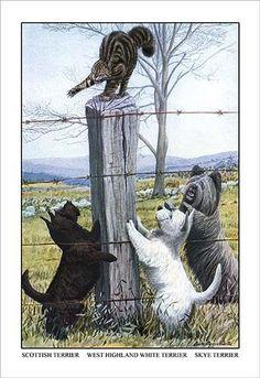 Scottish Terrier, West Highland Terrier, Skye Terrier