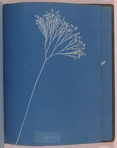 Atkins, Anna Date: 1853 Description: A cyanotype labelled 'Ceylon', from the album 'Cyanotypes of British and Foreign Ferns', made by Anna Atkins in Sun Prints, Mood Indigo, Cyanotype, Botanical Art, Atkins, Graphic Illustration, Printmaking, Art Photography, Blues