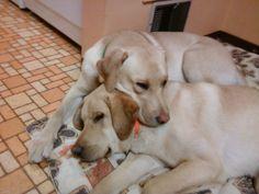 Snuggling Together