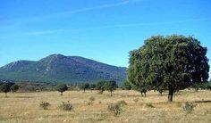 En este clima mediterráneo podemos encontrar diversidad de fauna, aquí una muestra de ello. ¿De qué árbol estamos hablando?