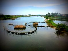 Learn the art of farming, cooking Vietnamese dishes, or making rice paper. This organic farm is located outside Hoi An & has a great restaurant, Waterwheel. Hoi An, Great Restaurants, Organic Farming, Southeast Asia, Places To Visit, Herbs, River, Outdoor, Outdoors