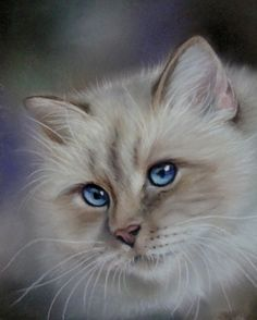 Perfect blue eyes