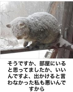 Very cold kitty :(