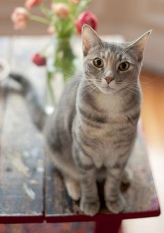 """""""Although a cat can hear a can of tuna being opened a mile away, she can't hear a simple command three feet away."""" -- Anonymous"""
