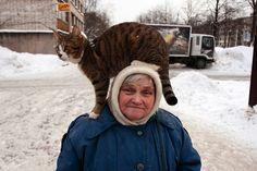 womenandcats:  By Aleksey Golikov
