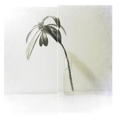 Nostalgie de la terre is a creation by the artist Patrick Martin. Patrick Martin, My Flower, Flowers, Shape Design, Bookbinding, Art Photography, Artsy, Graphic Design, Inspiration