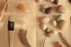 mi casita en el bosque: Colecciones Naturaleza ♧ (primera parte)
