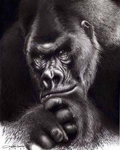 Gorilla Tattoo, Lion Tattoo, Pencil Portrait, Portrait Art, Hyperrealistic Drawing, Types Of Monkeys, Skull Sleeve Tattoos, Pet Monkey, Art Sculpture