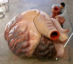 Life-size model of a blue whale heart. A blue whale heart is the size of a Volkswagen Beetle and pumps 10 tons of blood through the massive blue whale body. A blue whale aorta (the main blood vessel) alone is large enough for a human to crawl through.
