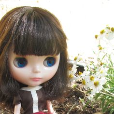 Simply Chocolate Blythe in my garden on her first day home