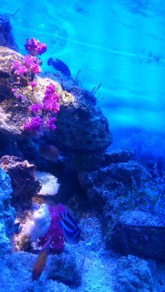 aquarium :)