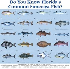 Florida Fish Pictures
