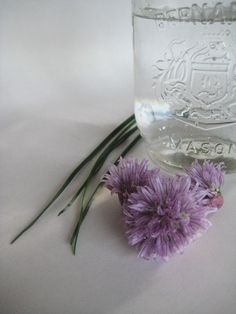 How to make Chive Flower infused Vinegar