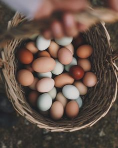 pinterest @rachel_stansfield | natural egg colors, home grown eggs, homesteading, chicken eggs, duck eggs, farm life, self sufficient