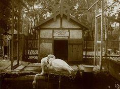 Dos flamencos egipcios en la antigua Casa de Fieras del parque en una foto de 1914.
