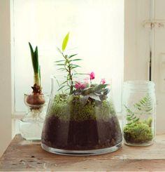 terrariums are mini planets of garden magic.