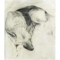 Andrew Wyeth (American, 1917-2009) Untitled (German Shepherd) Pencil on paper