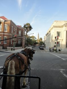 Bucket list, Charleston, SC.  Go on a buggy tour to learn about the city. #summerlambventures
