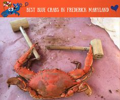 We Love our Blue Crabs in Frederick County. One of the best things about Maryland living is having access to those yummy blue crabs!A summer in Frederick isn't complete without a crab feast...or four or five. Here's the best places to make that happen: