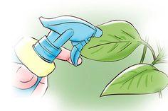 Veja aqui como fazer fertilizante líquido orgânico e deixe as suas plantinhas mais fortes!