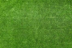 The American lawn is dominated by short green grass. Billions are spent each year on mowers, lawn equipment, fertilizers, water, … Green Grass Background, Textured Background, Trees For Front Yard, Landscaping Images, Grass Field, Green Lawn, Tree Tops, Green Backgrounds, Nature Photos