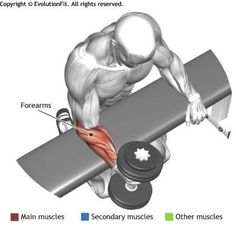 FOREARMS - WRIST ROTATION OVER A BENCH